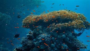 خطر-على-الكائنات-البحرية-مساحة-الشعاب-المرجانية-تنكمش-بنسبة--منذ-الخمسينيات