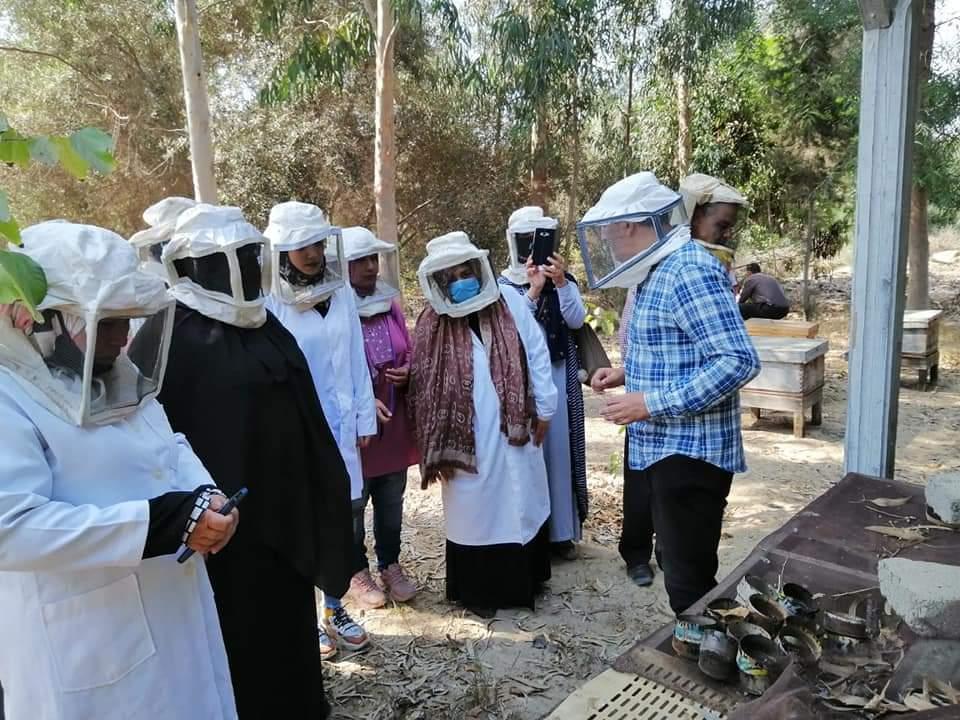 استخلاص العسل وفحص الخلايا في برنامج مشاريع تربية النحل بجامعة القناة
