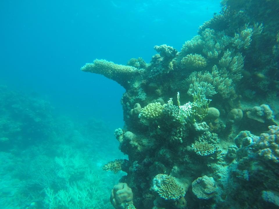 مواقع الغوص بالبحر الاحمر هي الاشهر عالميا