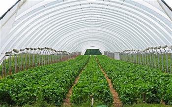 خبير-زراعات-محمية-;التكنولوجيا;-المبيد-الافتراضي-الفعال-للآفات-داخل-الصوب
