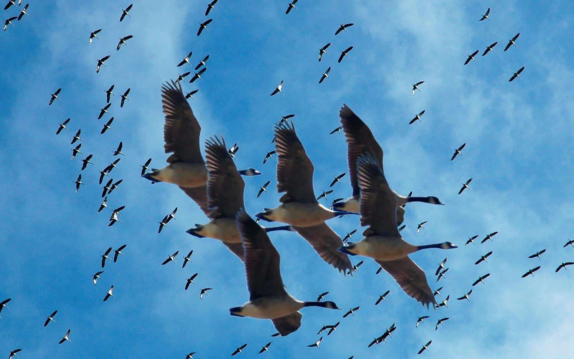 العبور الآمن مصر تغلق طواحين الهواء أمام الطيور المهاجرة