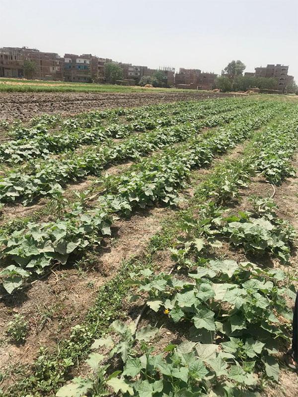 الأرض الزراعية